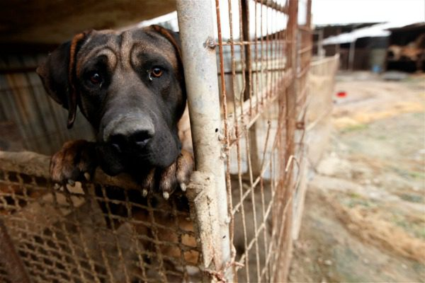 Help to fight the dog meat trade!