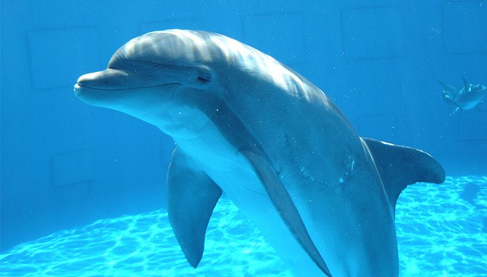 Say no to dolphins at Kuwait Scientific Centre