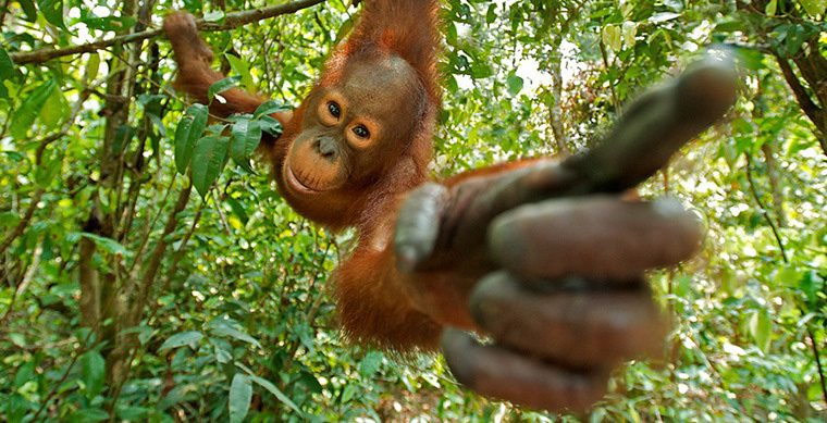 What products contain palm oil? – NL