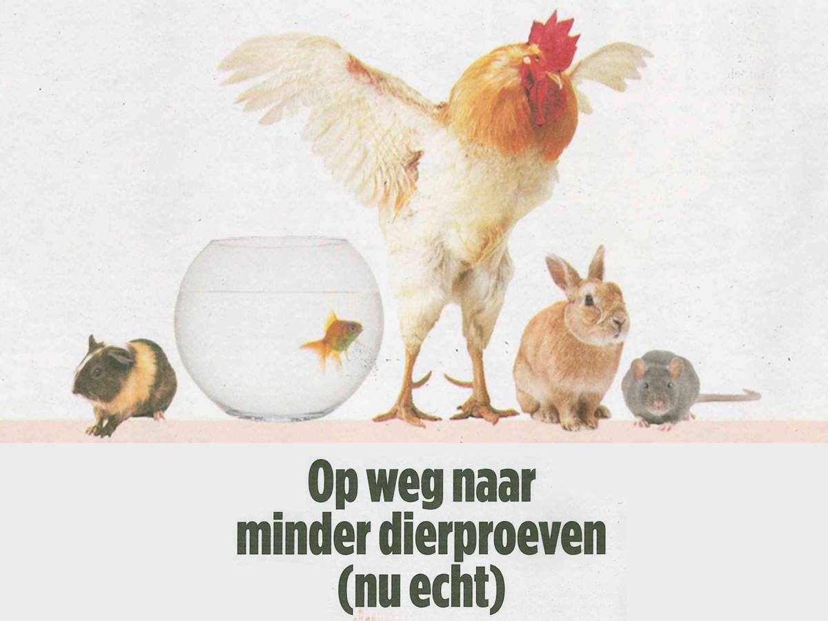 Less animal vivisection in Holland – NL