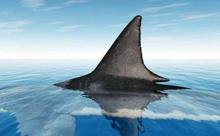Sale and trade of shark fins to continue in Florida