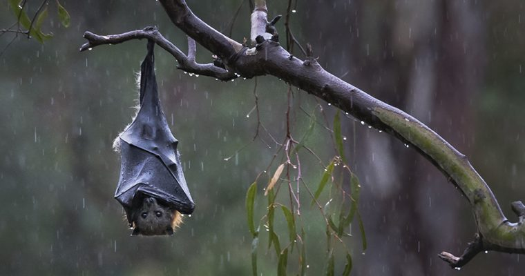 Sign to stop gas and oil companies killing endangered bats