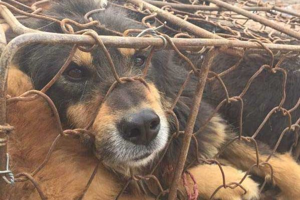Ban on the dog&cat meat trade in Taiwan!