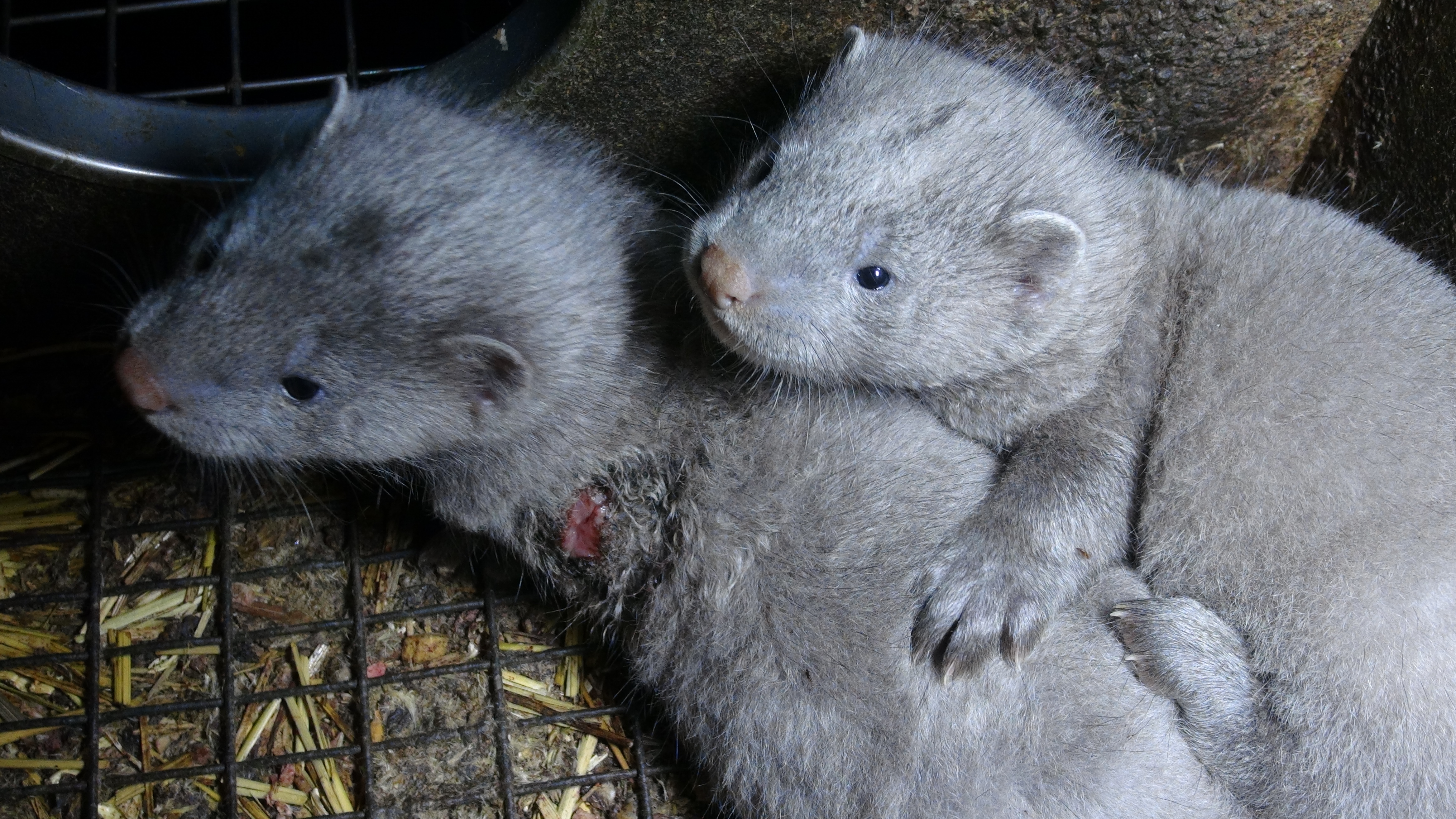 Where does fur come from?