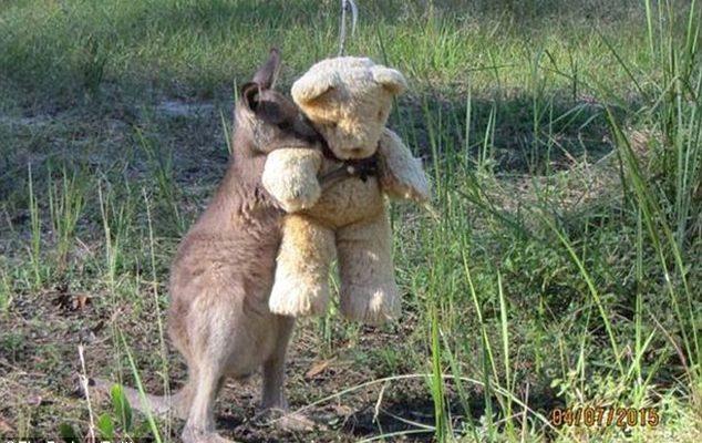 Baby kangaroo and his Teddy