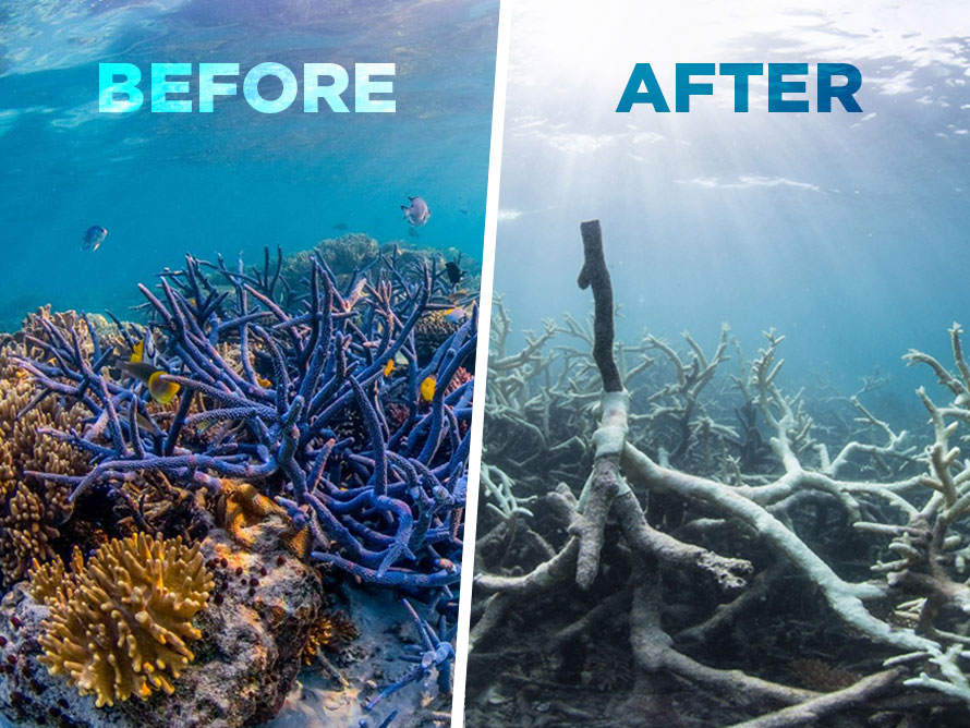 The Great Barrier Reef is officially terminal