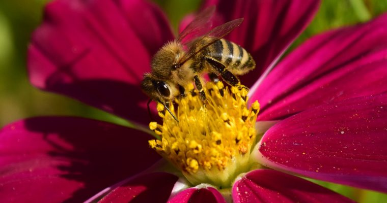 Without bees the world would be different
