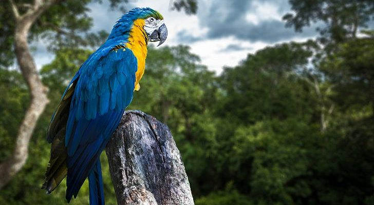 Petition to stop the logging in the Amazon rainforest