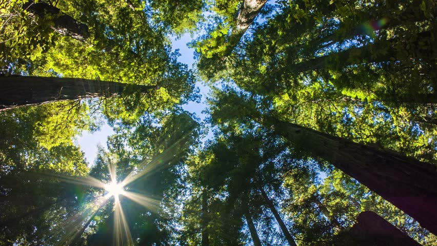 Robert Redford is the Redwood