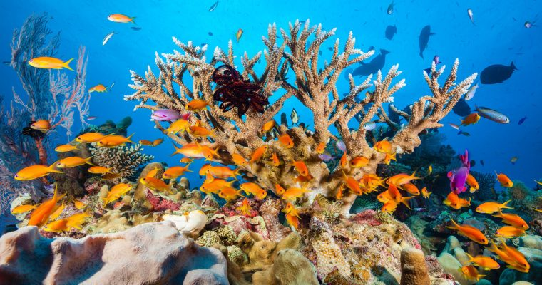 Ian Somerhalder is coral reef