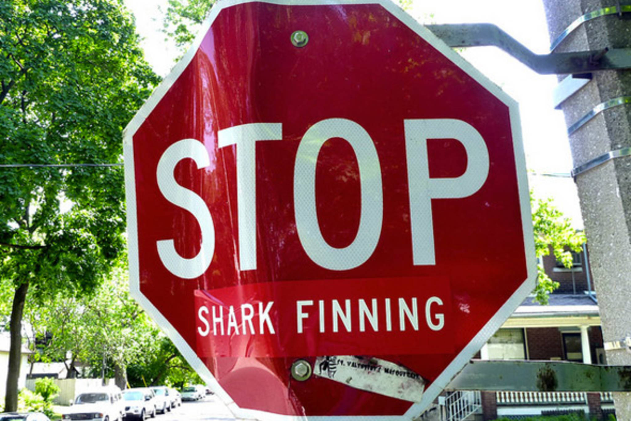 Shark Fin Sales Elimination Act