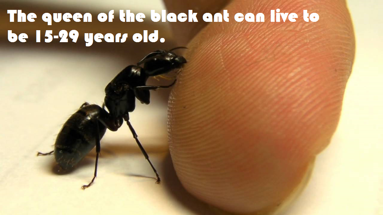 Fun Fact Friday – Its an ants life