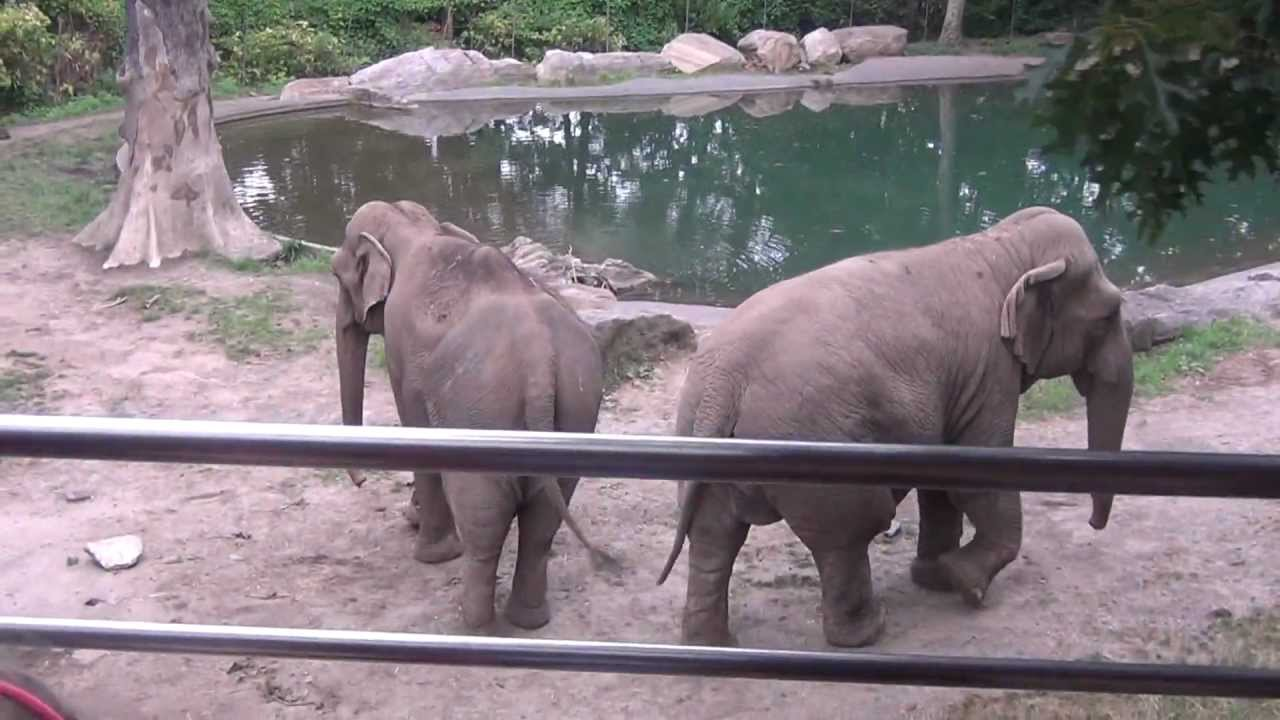 Tell the President of Laos to end the illegal elephant trade