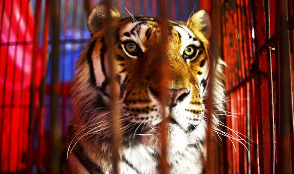 Do you deserve freedom? Why do tigers not