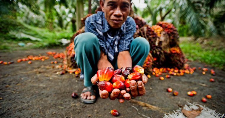 Indonesia puts 3-year ban on new palm oil plantations